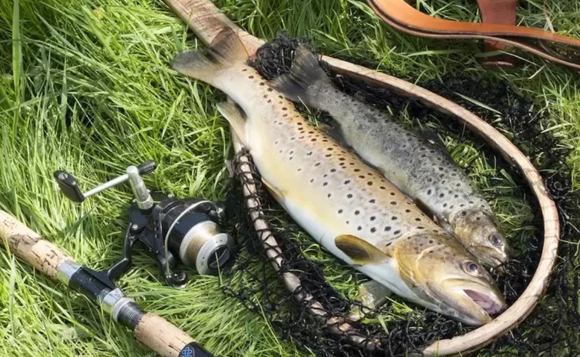pisztráng horgászat eszközei
